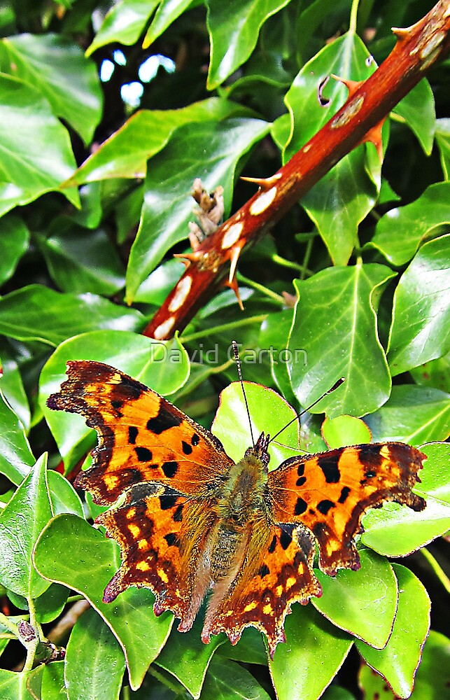 Butterfly close up by buttonpresser