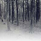 parallel forest 1 by Margaret Bryant