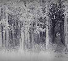 parallel forest 2 by Margaret Bryant
