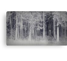 parallel forest 2 Canvas Print