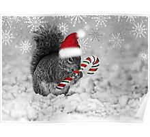 Squirrel in the Snow - Christmas Poster
