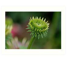 Green Sunflower Bud Art Print