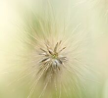 Macro Fluffy Grass by Michele Doucette