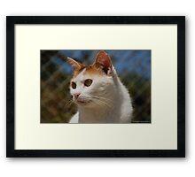 Tomasina stray Framed Print
