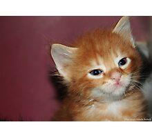 Little tomasina kitten Photographic Print