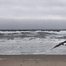 A Hazy Day On The Coast by NancyC