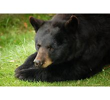 Beary Bored Photographic Print