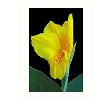 Wild Canna Lily Bloom Art Print
