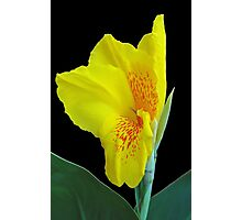 Wild Canna Lily Bloom Photographic Print