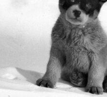 Blizzard, the pup in Antarctica  Sticker