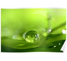 Pea Green Poster