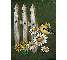 Goldfinch & the Fence in Arcylic Photographic Print