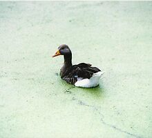 Duck Lake by Lewis Lees