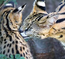 Serval Mom and Kitten by servals