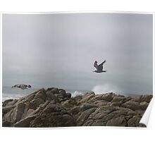 fly fly fly away Poster