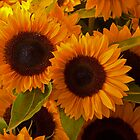 Sunflowers at Pike Market, Seattle by JMChown
