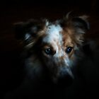 Portraits of a Puppy by Laura-Lise Wong