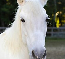 Rianna our rescue horse by Rob Lavoie