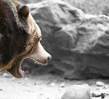 Angry Grizz by Karol Livote