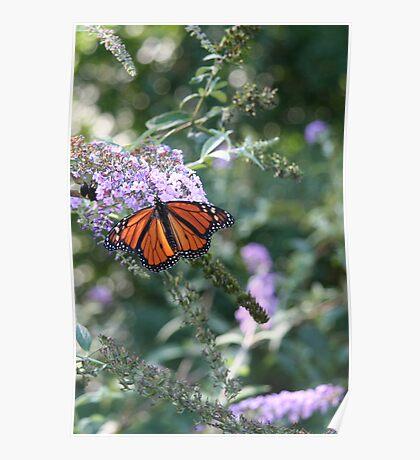 Butterfly Season - Monarch Poster