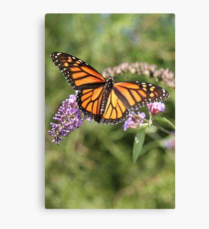 Butterfly Season - Monarch 2 Canvas Print