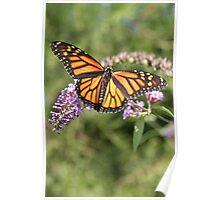 Butterfly Season - Monarch 2 Poster