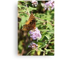 Butterfly Season - Great Spangled Fritillary 2 Canvas Print