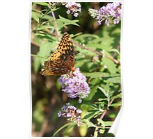 Butterfly Season - Great Spangled Fritillary 2 Poster