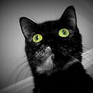 """The Cat """"We're All Mad Here."""" by Laura-Lise Wong"""