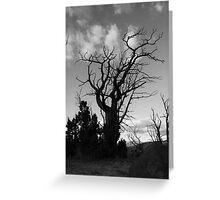 Dark tree..... Greeting Card