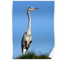 Heron on a Hill Poster