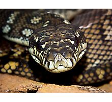 Hungry Python Photographic Print