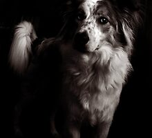 Thanks to the Dogfiles!!! by Laura-Lise Wong