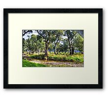 Trees at Willochra Creek. Framed Print