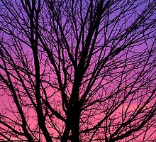 Dawn Silhouette by Kenneth Keifer
