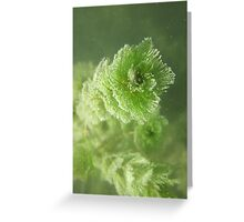 Bubble Eye Weed Greeting Card