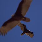 Soaring silhouette by JamesA1