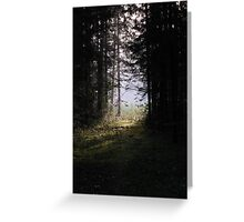 Forest pathway in morning lighting Greeting Card