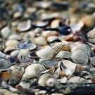 Shells by Photofreaks
