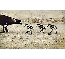 Three Little Ducks Photographic Print