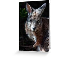 Wallaby Greeting Card