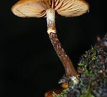 Fungus by Hugh Coleman