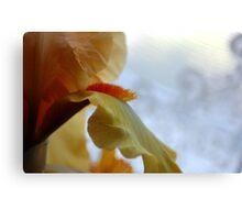 Yellow Bearded Iris Canvas Print