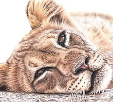 Tired Young Lion by Nicole Zeug