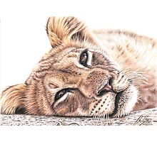 Tired Young Lion Photographic Print