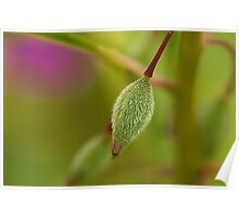 Seed Pod of Touch Me Not Poster