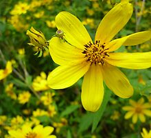 Yellow Wildflower In The Wind By Jonathan Green by Jonathan  Green
