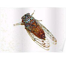 Cicada colors Poster