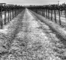 Dry Vines Sticker