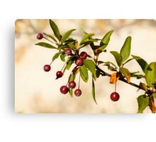Fall Fruit Canvas Print